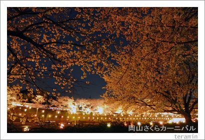 岡山さくらカーニバル 夜桜 写真3