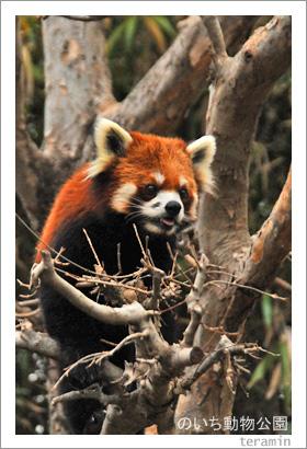 のいち動物公園 写真4