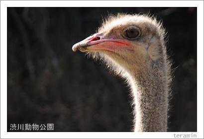 渋川動物公園 写真3