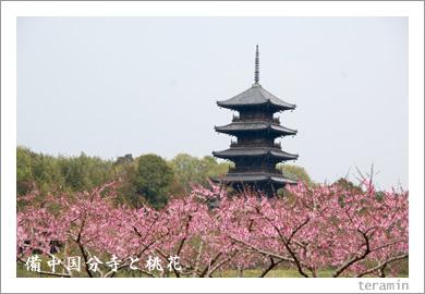備中国分寺と桃花1