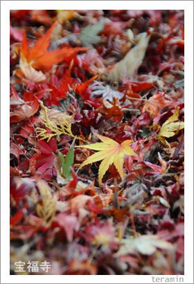 宝福寺の紅葉 写真3