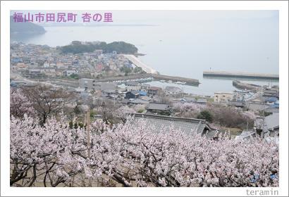 田尻の杏 写真2