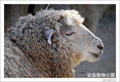 安佐動物公園 写真5