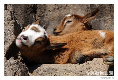 安佐動物公園 写真4