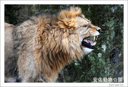 安佐動物公園 写真3