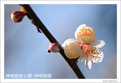 神崎緑地公園・神崎梅園 写真3