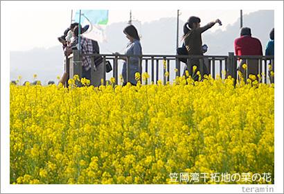 笠岡湾干拓地の菜の花 写真2