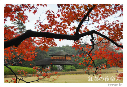 後楽園の紅葉写真2
