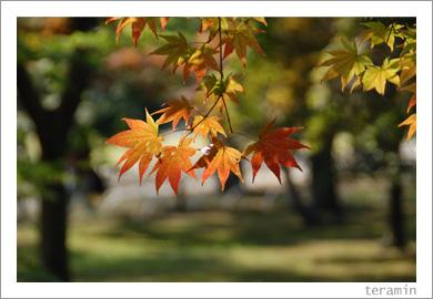 後楽園・秋2