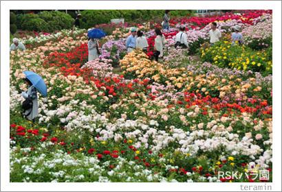 RSKバラ園 写真2