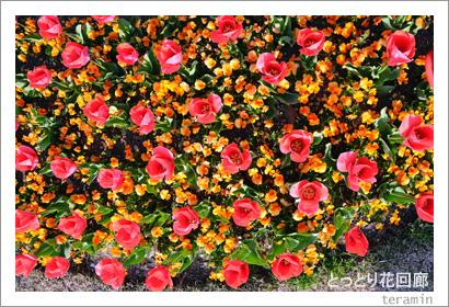 とっとり花回廊 写真4