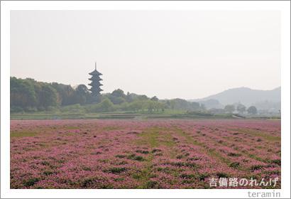吉備路のれんげ 写真3