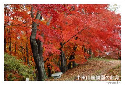 半田山植物園の紅葉 写真1