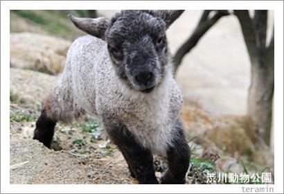 渋川動物公園 写真2