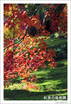 紅葉の後楽園4