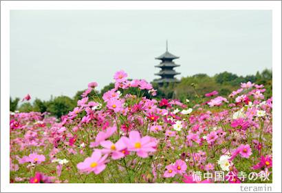 備中国分寺の秋 写真1