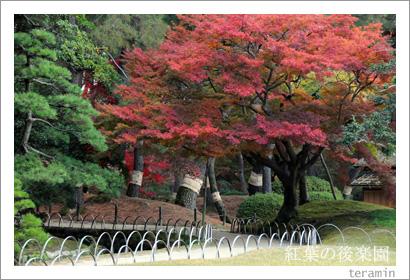 後楽園の紅葉写真1