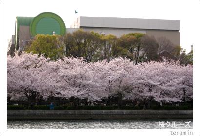 桜クルーズ3