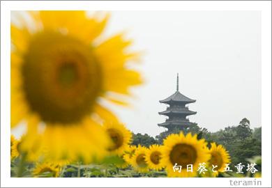 向日葵と五重塔1