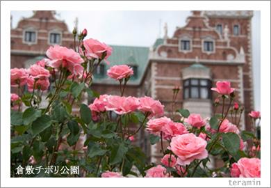 倉敷チボリ公園のバラ1