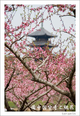 備中国分寺と桃花2
