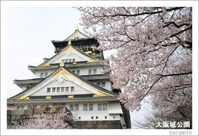 大阪城公園の桜1