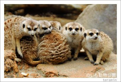 のいち動物公園 写真3