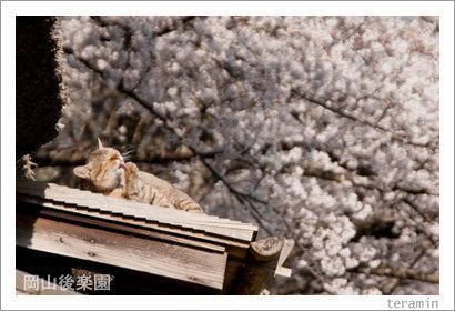 kourakuen120408_4