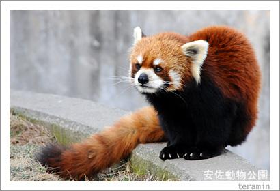 安佐動物公園 写真1