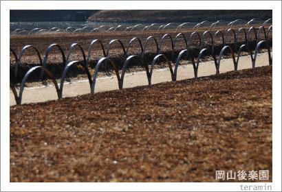 岡山後楽園 芝焼き写真2