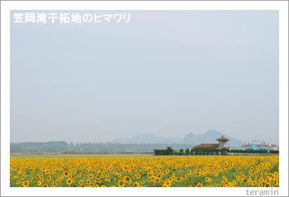 笠岡干拓地のヒマワリ 写真1