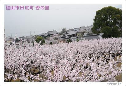 田尻の杏 写真1
