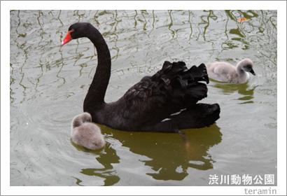 渋川動物公園 写真4