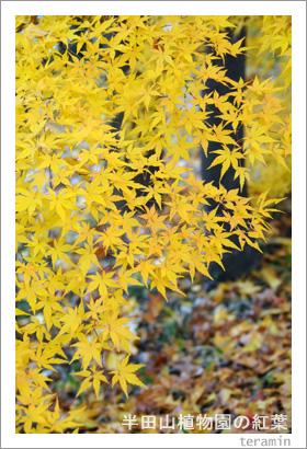 半田山植物園の紅葉 写真4