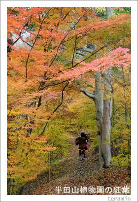 半田山植物園の紅葉 写真3