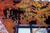 紅葉と社寺