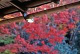 軒先にみる秋の京都