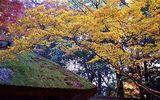茅葺ー京都の秋