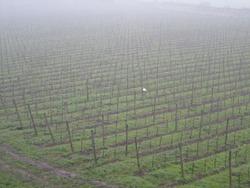 ブドウ園遠景のポツン少しヨリ50%