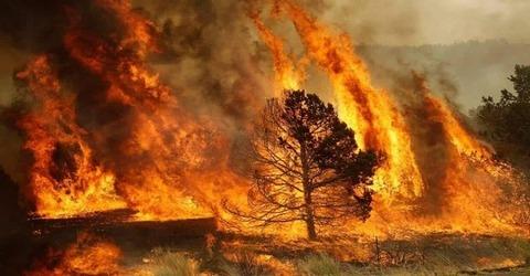650一本の木と猛火
