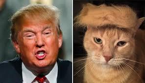 トランプ猫