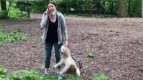 central-park-video-dog-video-african-american-trnd-screengrab