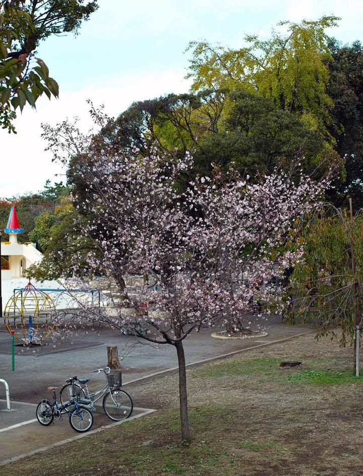 飛鳥 山 公園 桜 画像