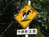 釧路牛横断注意