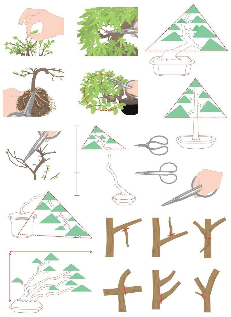 s_bonsai478