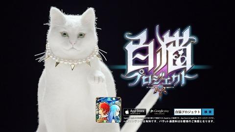 白猫1406