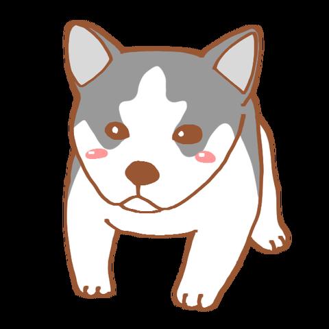ハスキー子犬