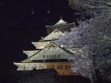 お城のライトアップと桜
