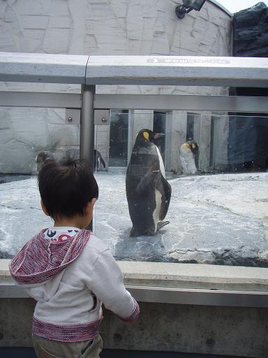 ペンギン3匹?1