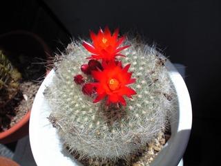 0421真っ赤な花